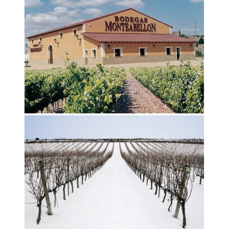 Pictures from Bodegas Monteabellón (Ribera del Duero - Spain)