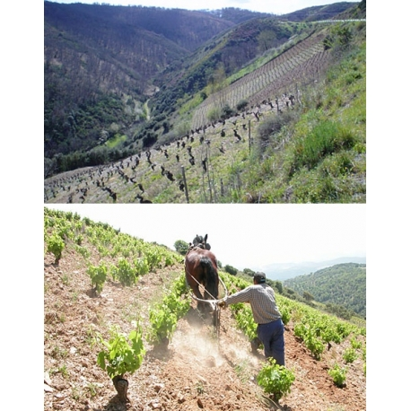 Pictures from Descendientes de J. Palacios (Bierzo - Spain)