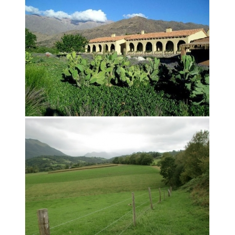 Pictures from Bodega Colomé (Valle Calchaquí - Salta - Argentina)