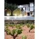 Pictures from Bodegas La Purisima (Yecla - Spain)
