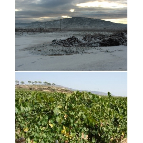 Pictures from Bodegas y Viñedos El Sequé (Alicante - Spain)