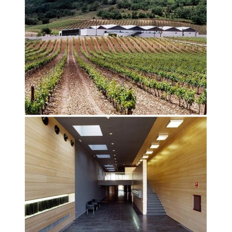 Pictures from Bodegas Cepa 21 (Ribera del Duero - Spain)