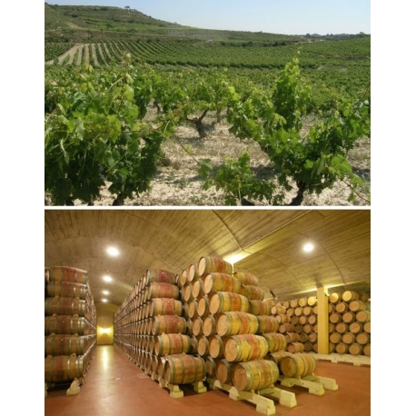 Pictures from Bodegas Luis Cañas (Rioja - Spain)