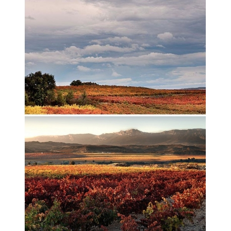 Pictures from Bodegas Palacios Remondo (Rioja - Spain)