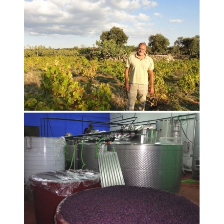 Pictures from Bodegas Canopy (Méntrida - Spain)