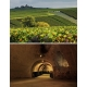 Images de Champagne Ruinart (Champagne - France)