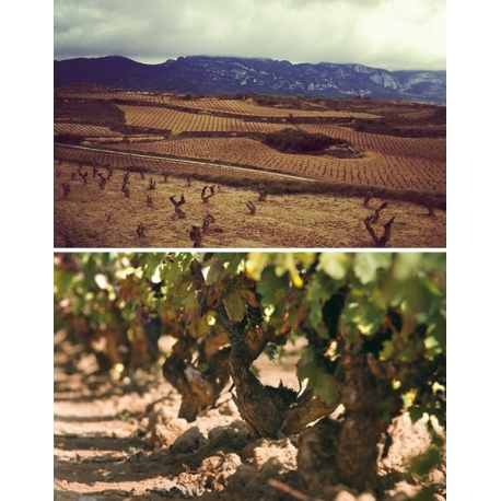Pictures from Bodegas Orben (Rioja - Spain)