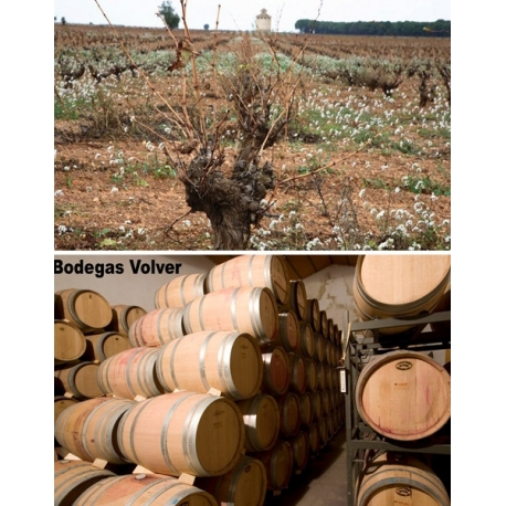 Pictures from Bodegas Volver (La Mancha - Spain)