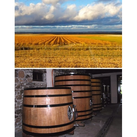 Pictures from Bodegas José Pariente (Rueda - Spain)