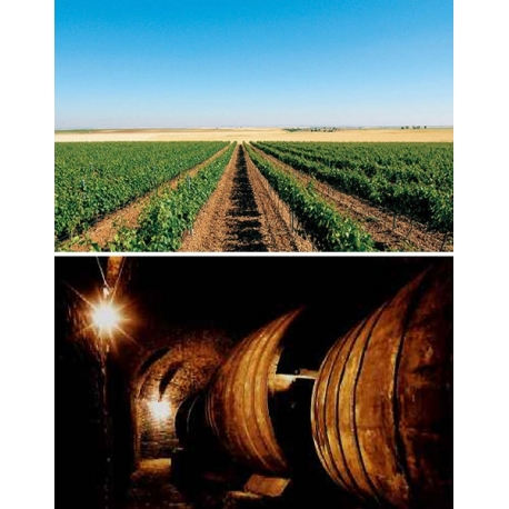 Pictures from Bodegas Angel Lorenzo Cachazo (Rueda - Spain)