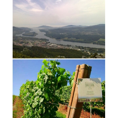 Pictures from Bodegas Terras Gauda (Rías Baixas - Spain)