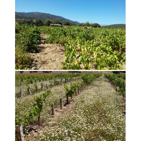 Pictures from Bodegas Jiménez Landi (Méntrida - Spain)