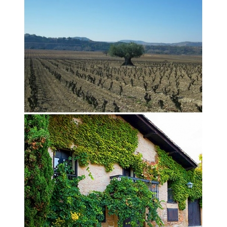 Pictures from Viñedos del Contino (Rioja - Spain)