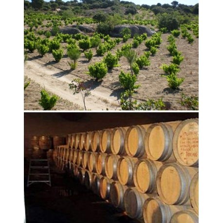 Pictures from Bodegas Neo (Ribera del Duero - Spain)