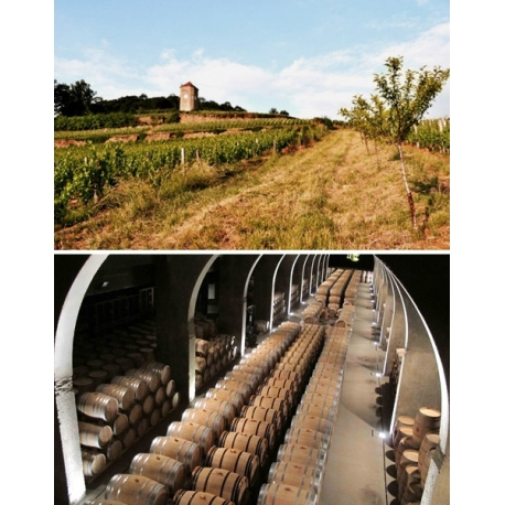 Pictures from Pago de los Capellanes (Ribera del Duero - Spain)
