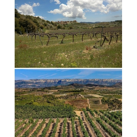 Pictures from Cellers Can Blau (Montsant - Spain)