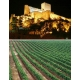 Pictures from Bodegas Atalaya (Almansa - Spain)