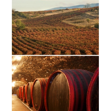 Pictures from Hernando & Sourdais (Ribera del Duero - Spain)