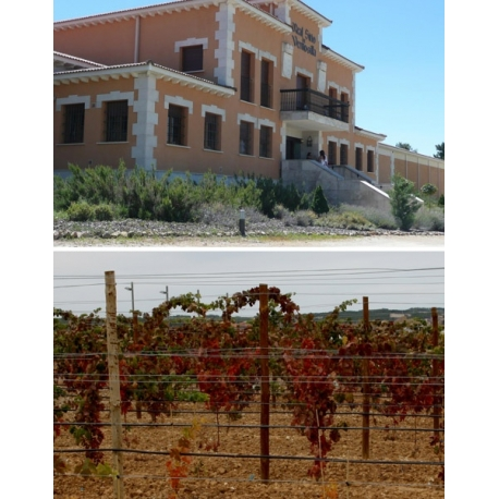 Pictures from Bodegas PradoRey (Rueda - Spain)