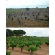 Pictures from Bodegas Altolandon (Manchuela - Spain)