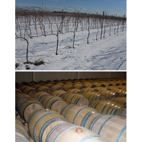 Pictures from Bodegas Licinia (Madrid - Spain)