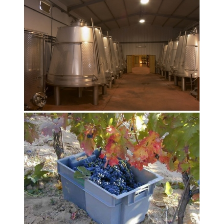 Pictures from Bodega Servilio - Arranz (Ribera del Duero - Spain)
