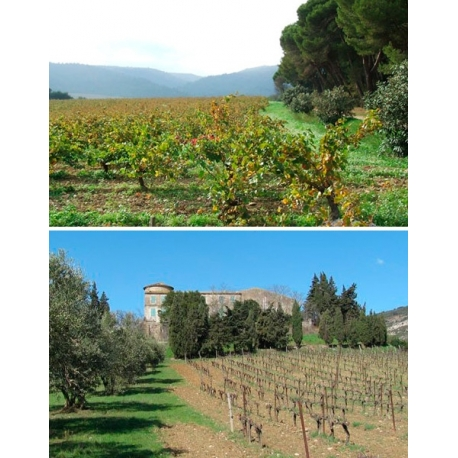 Pictures from Louis Max (Nuits Saint Georges - Bourgogne - France)