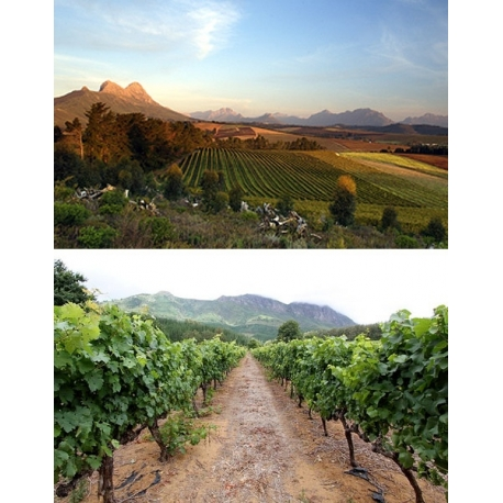 Pictures from Delheim (Stellenbosch - South Africa)