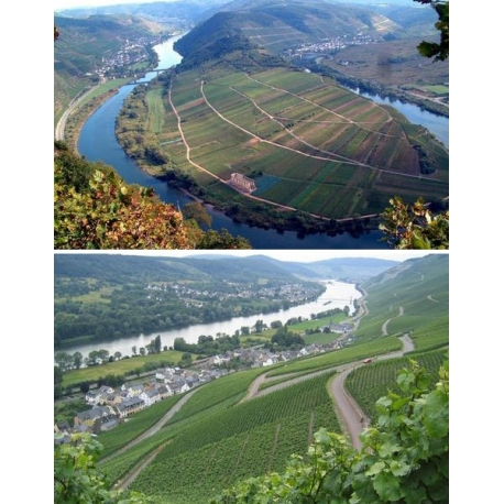 Pictures from Gutsverwaftung Stiftungsweingut (Mosel-Saar-Ruwer - Germany)