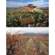 Pictures from Bodegas Pujanza (Rioja - Spain)