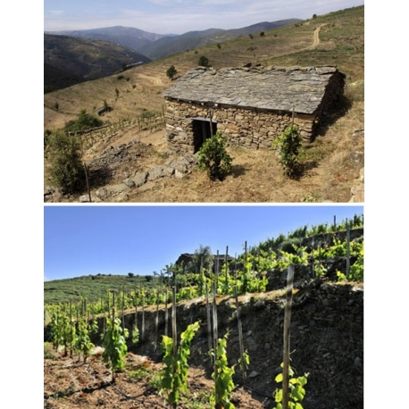 Pictures from Dominio do Bibei (Ribeira Sacra - Spain)
