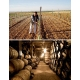 Pictures from Bodegas Casto Pequeño (Rueda - Spain)
