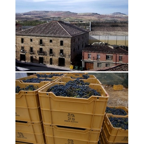 Pictures from Finca Allende (Rioja - Spain)