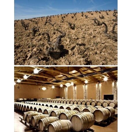 Pictures from Bodegas Emilio Moro (Ribera del Duero - Spain)