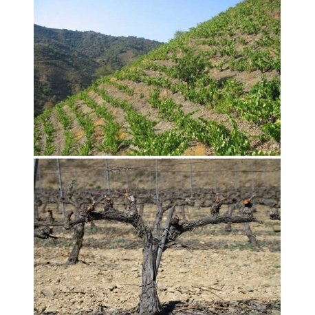 Pictures from Clos Dominic (Priorat - Spain)