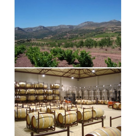 Pictures from Bodegas Alto Moncayo (Campo de Borja - Spain)