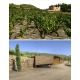 Pictures from Alfredo Arribas (Priorat - Spain)