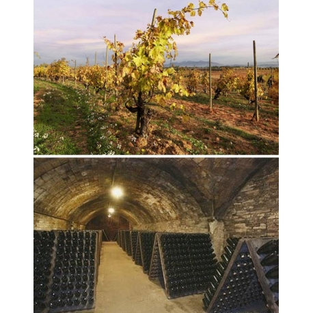 Pictures from Recaredo (Cava - Spain)