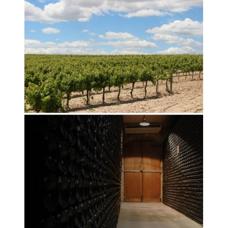 Pictures from Bodegas Bertha (Cava - España)