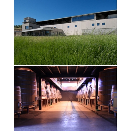 Pictures from Bodegas Aalto (Ribera del Duero - Spain)