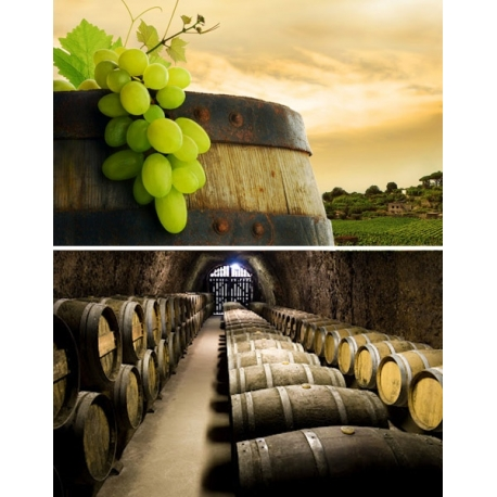 Pictures from Bodega Herrero (Rueda - Spain)