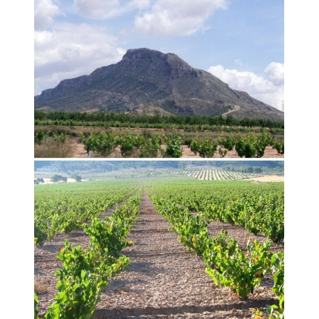 Pictures from Crápula Wines (Jumilla - Spain)