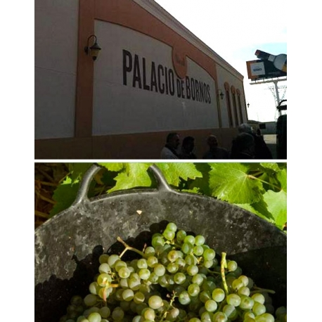Pictures from Bodega Palacio de Bornos (Rueda - Spain)