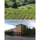 Pictures from Bodegas Aragonesas (Campo de Borja - Spain)