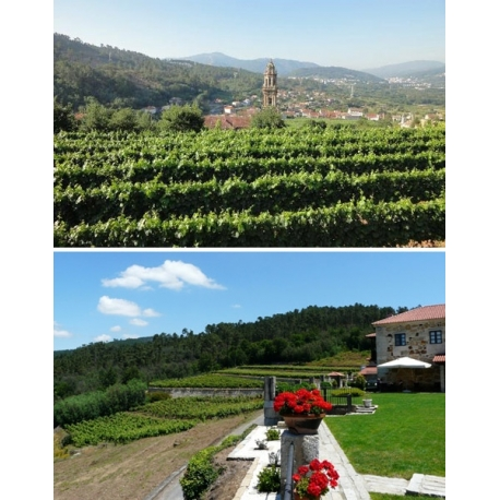 Pictures from Bodegas Casal de Armán (Ribeiro - Spain)