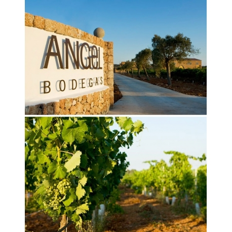Pictures from Bodegas Angel (V.T. Mallorca - Spain)