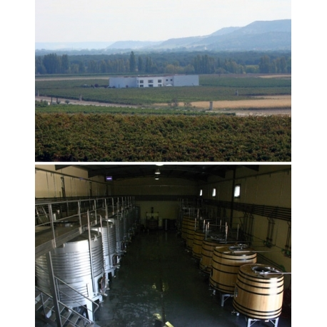 Pictures from Bodegas y Viñedos Tábula (Ribera del Duero - Spain)