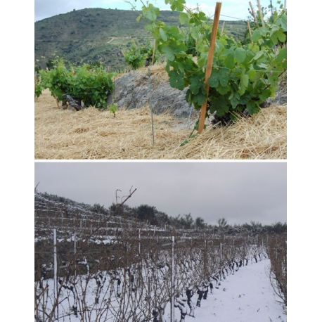 Pictures from Bodegas La Tapada (Valdeorras - Spain)