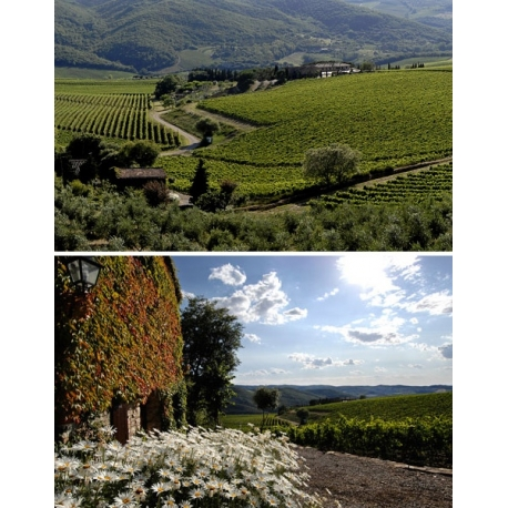Pictures from Melini (Brunello di Montalcino - Toscana - Italy)
