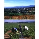 Pictures from Viñedos y Bodegas Pittacum (Bierzo - Spain)